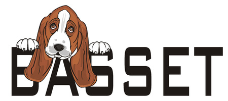 muzzle of basset hound peek up from his name of breed Stock Photo