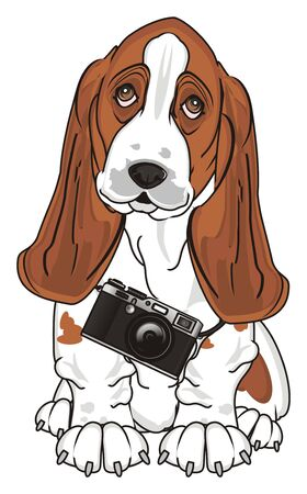 basset hound with camera Stock Photo
