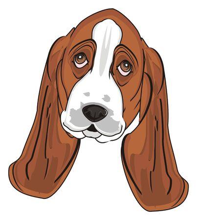 muzzle of basset hound