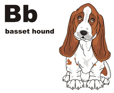 basset hound and abc