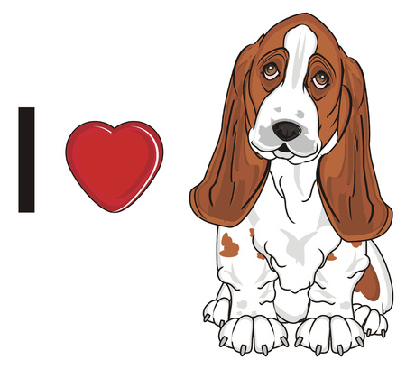 i love basset hound