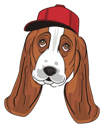 muzzle of basset hound in red cap Stock Photo