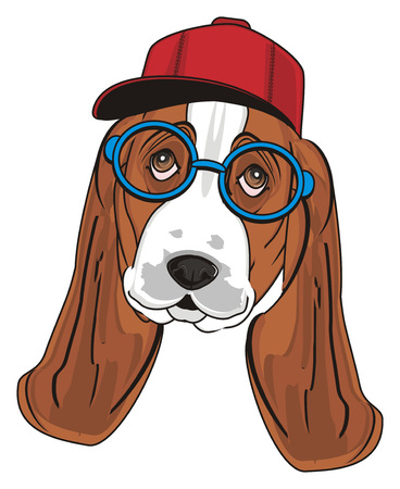 muzzle of basset hound in glasses and cap