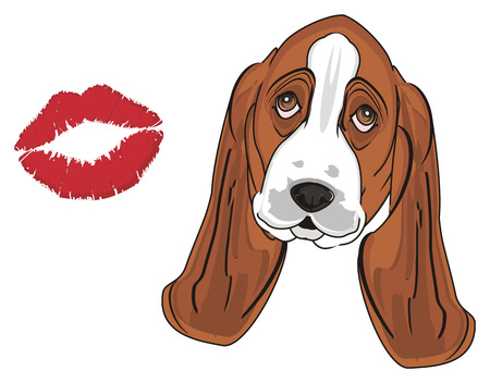 muzzle of basset hound and red kiss