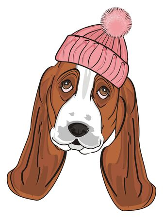 muzzle of basset hound in pink warm hat