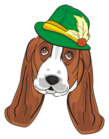 muzzle of basset hound in green hat Stock Photo