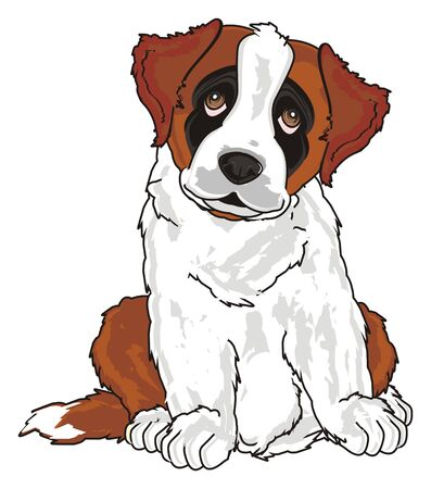 puppy of st. bernard Stock Photo
