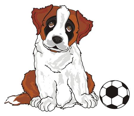 st. bernard and football
