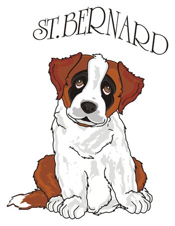 st. bernard sit with his name of breed