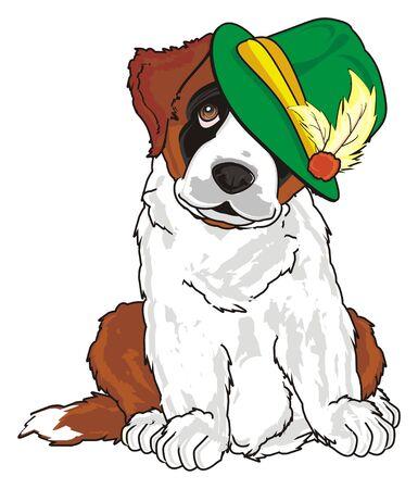 st. bernard with green hat sit