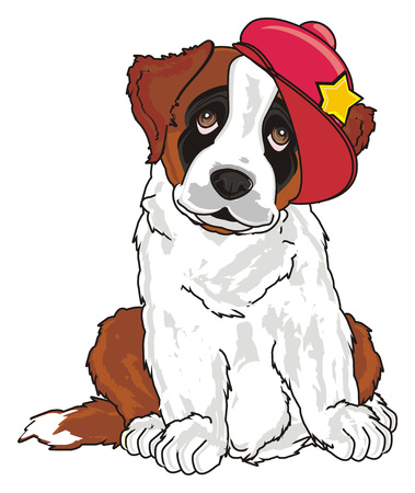 puppy of st. bernard with red cool sit and watch
