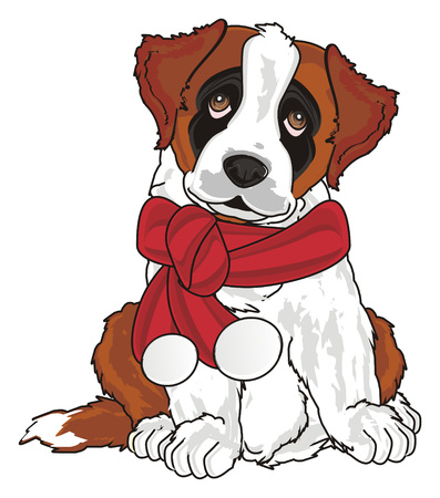 st. bernard with red christmas scarf Stock Photo