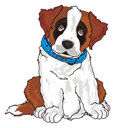 puppy of st. bernard in blue collar
