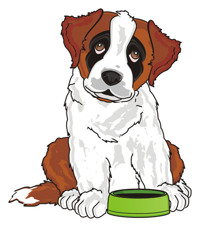 st. bernard ask to feed him Stock Photo