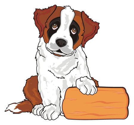 puppy of st. bernard sit with clean wooden banner Stock Photo