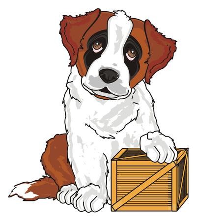 puppy of st. bernard with a wooden box