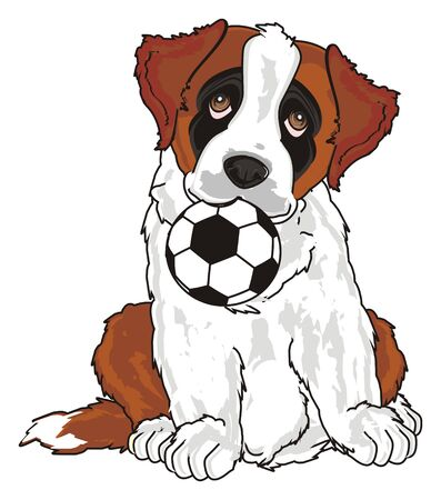puppy of st. bernard want play to football Stock Photo
