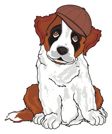 puppy of st. bernard in cap Stock Photo