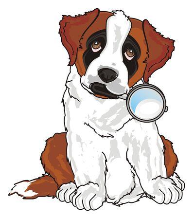 cute puppy od st. bernard hold a magnifier Stock Photo