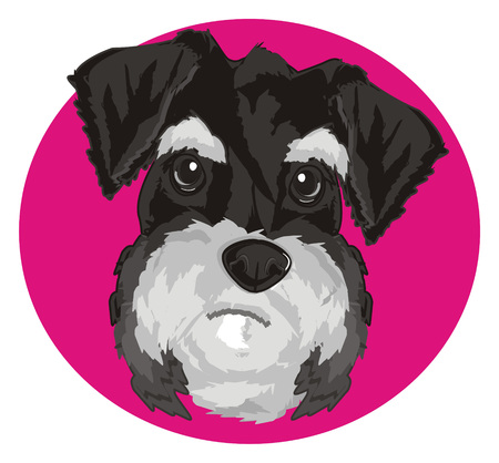 snout of schnauzer peek up from pink icon
