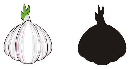 Colored garlic with solid black garlic
