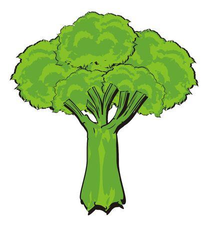 one green broccoli Stock Photo