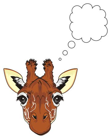 face of giraffe with clean footnote Stock Photo