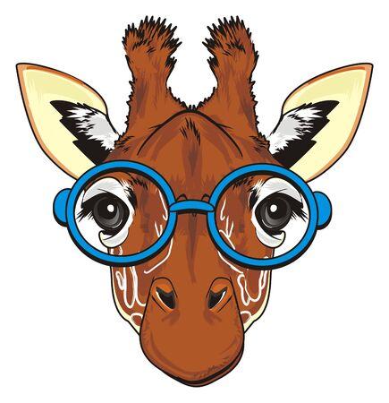 funny snout of giraffe in glasses