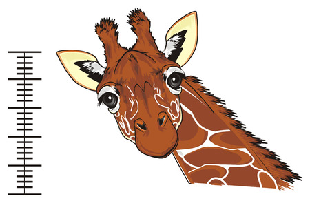 giraffe with ruler with numbers Stock Photo