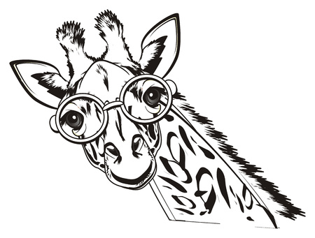 Line Drawing Giraffe : Black and white giraffe in pink glasses stock photo picture