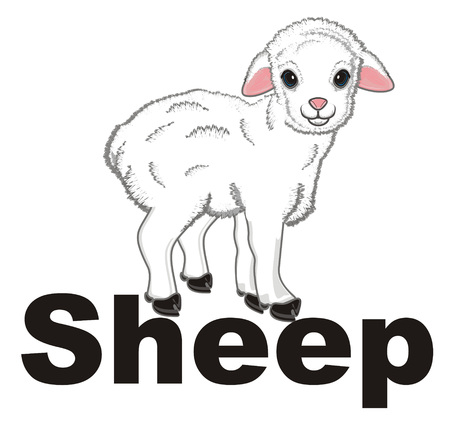 sheep and his name