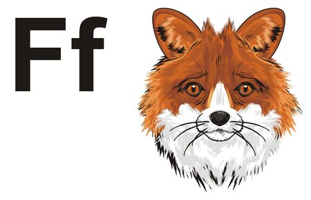 muzzle of fox and letters f
