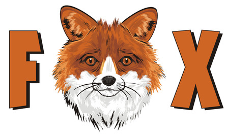 snout of fox peek up from letters