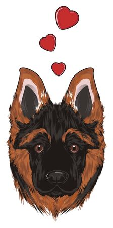 muzzle of shepherd and many red hearts
