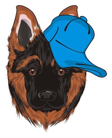 muzzle of shepherd in cool blue cap