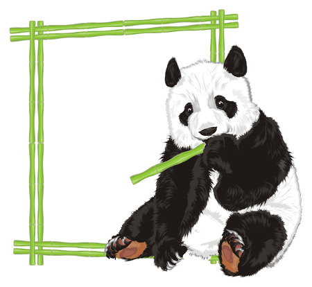 Panda Eat Near Of Frame Stock Photo Picture And Royalty Free Image