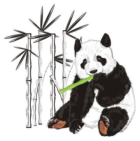 팬더는 대나무의 그림자 옆에서 먹는다.