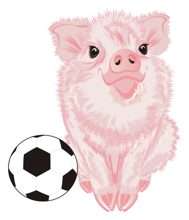 pig sit with a soccer ball Stock Photo