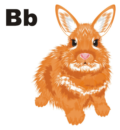bunny and letters b
