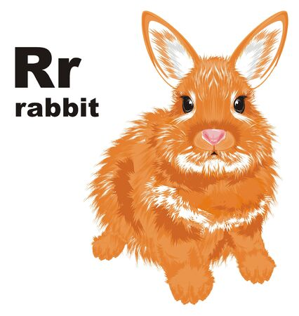 rabbit and abc