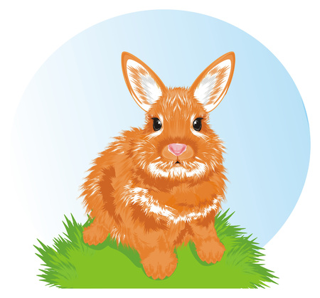bunny and nature