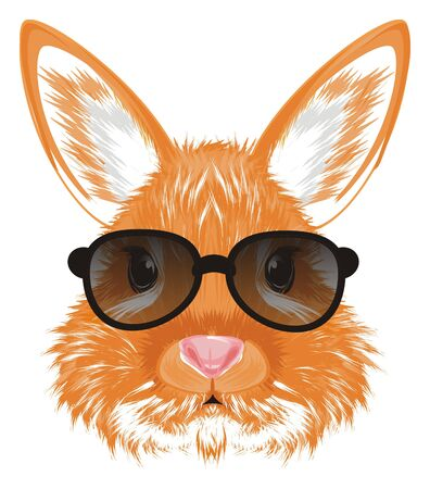 face of bunny in black sunglasses