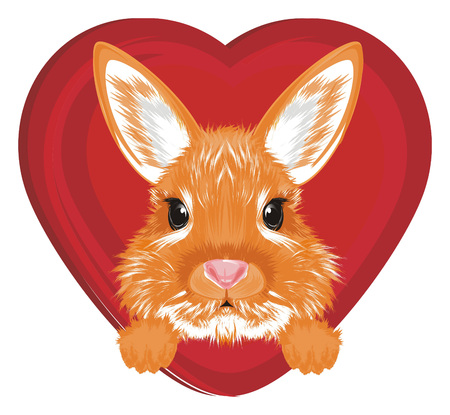 head of bunny peek up from red heart Stock Photo