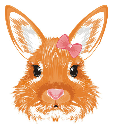 muzzle of bunny with little bow