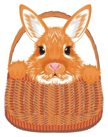 Muzzle of bunny stick out of brown basket