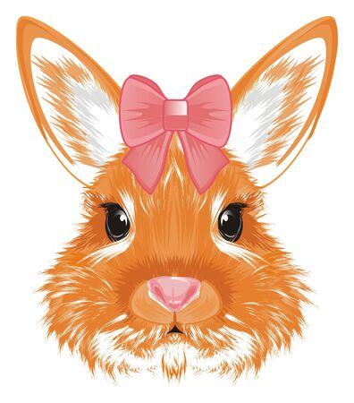 muzzle of bunny girl Stock Photo