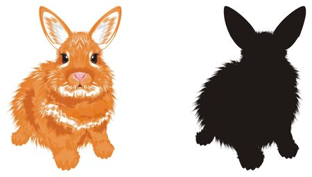Colored and solid black bunny Stock Photo