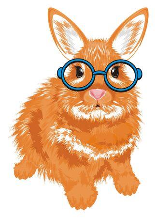 bunny in glasses Stock Photo