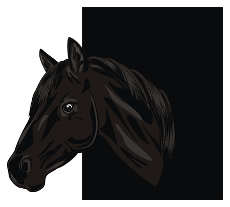 head of horse peek up from black background