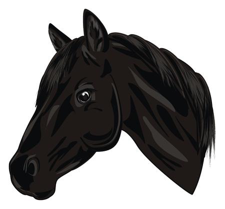 head of black horse 版權商用圖片 - 95385726